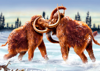 Mammoth fighting - Postcard