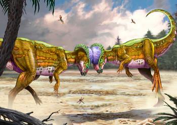 Pachycephalosaurus fighting Postcard