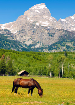 Teton Range, horse grazing - Postcard
