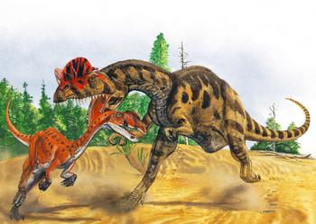 Dilophosaurus Attacking - Postcard