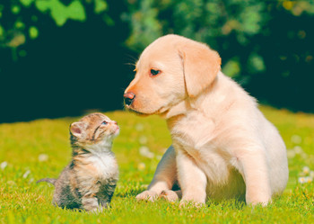 Dog, Puppy and Kitten - Postcard