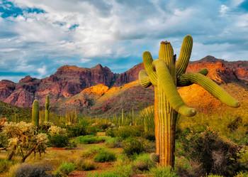 Saguaro Cactus 2 - Postcard