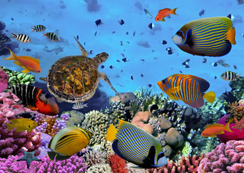 Coral reef, tropical fish and sea turtle Postcard