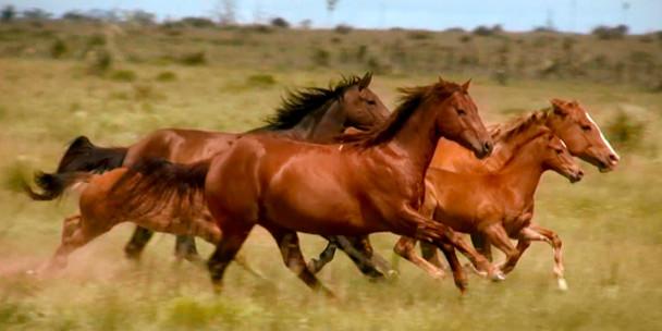Horse racing Long Card