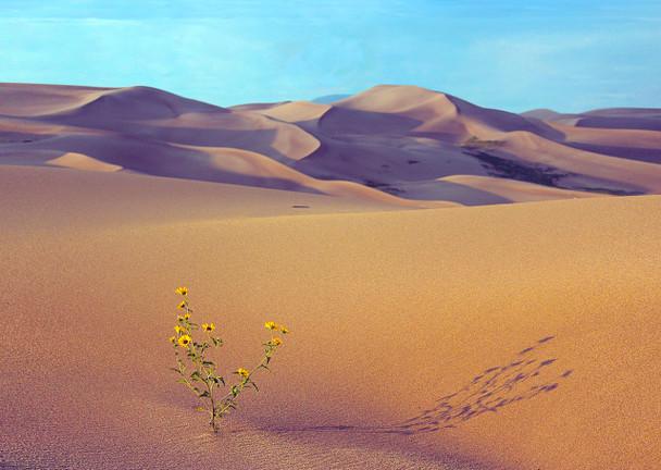 Sand Dunes - Postcard