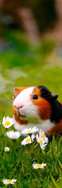 Guinea Pig Bookmark