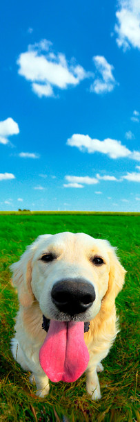 Dog, Golden Retriever Bookmark