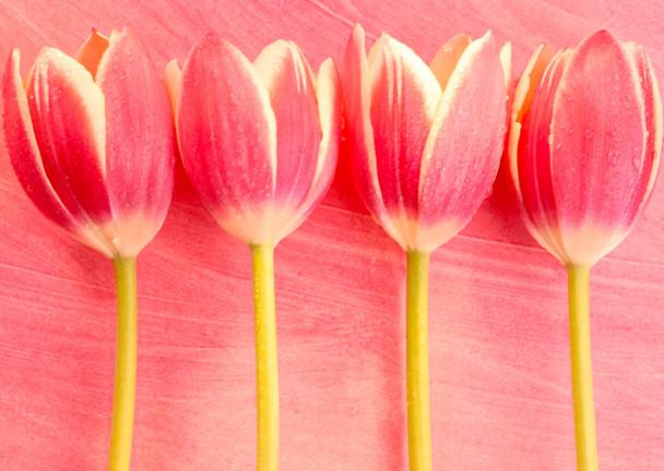Tulips 1 Postcard