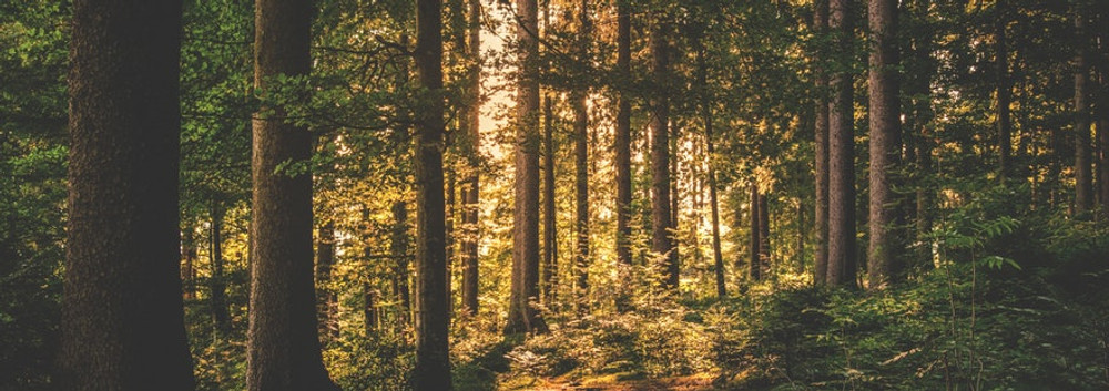 We've planted over 450,000 trees with Trees for the Future!