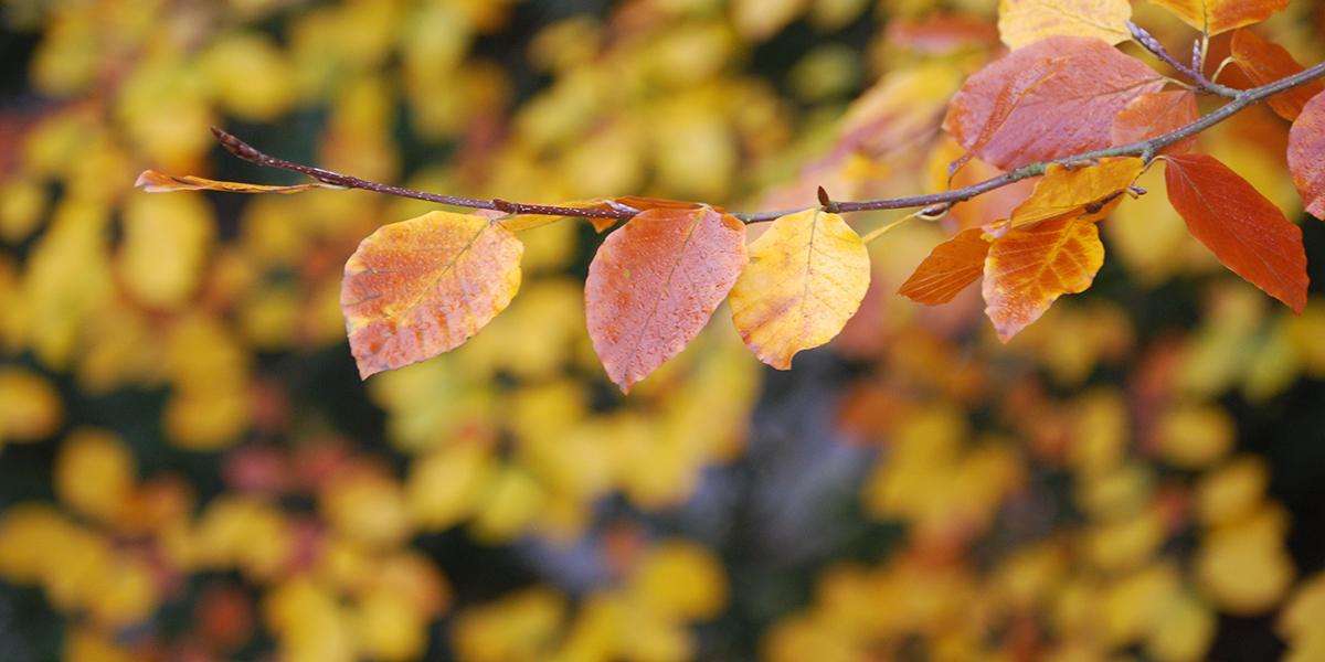 Fall Season Fonte Coffee Roaster Selection