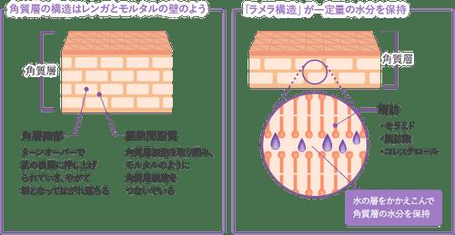 Ламеллярная структура кожи