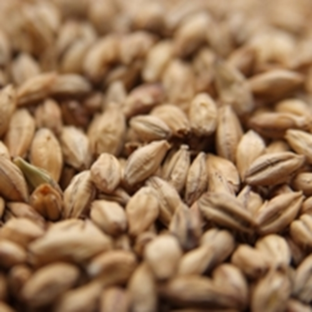 Malted & Unmalted Grains