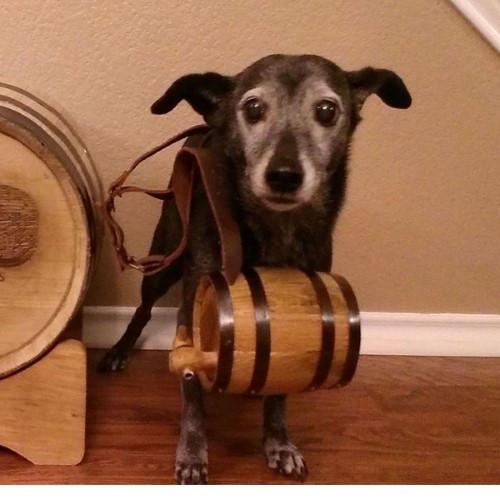 Barrel - American White Oak - 1/2 L Dog Collar