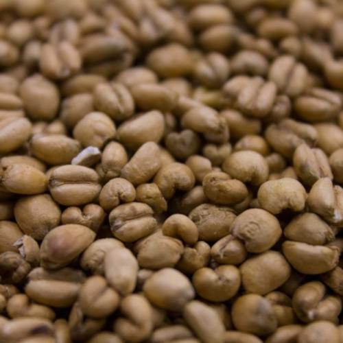 Torrified Wheat (Soft Red) - Per Pound
