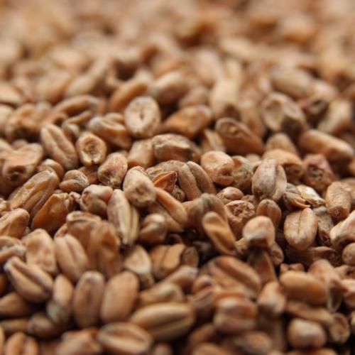 Dark Wheat Malt - Per Pound