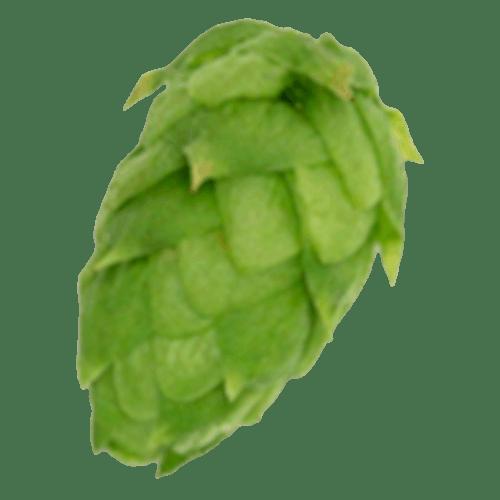 Citra Leaf Hops (US) - 1 LB