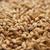 Belgian Pilsen Grain - Per Pound