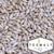 Wildfire Pale Malt (TexMalt) - 50 LB