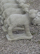 Detailed Md. Sheep