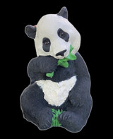 Patches the Panda