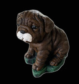 Wrinkled Pup