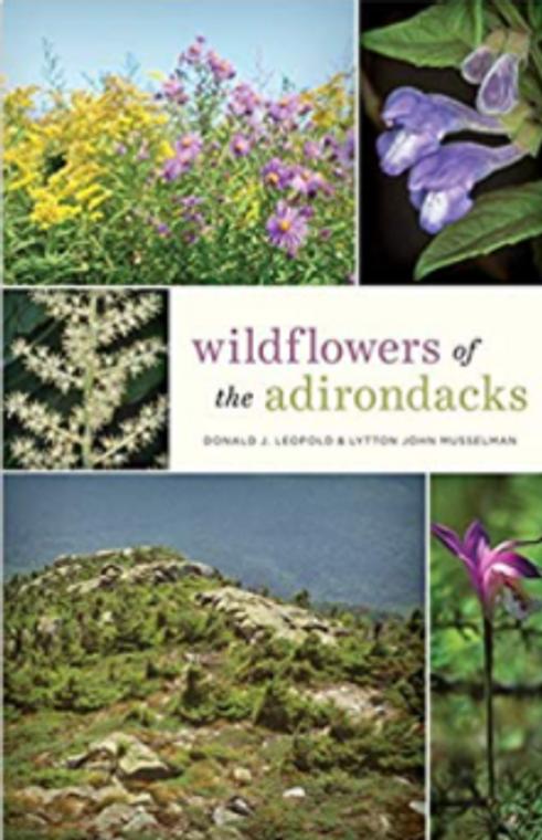 Wildflowers Of The Adirondacks
