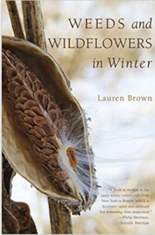 Weeds And Wildflowers In Winter