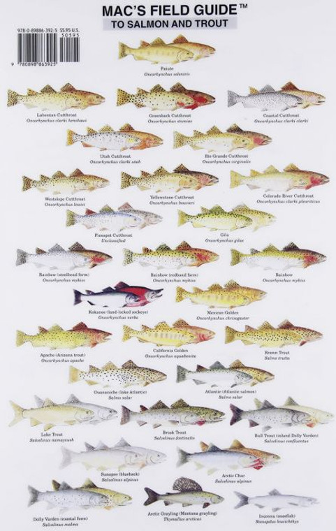 Mac's Field Guide To Salmon And Trout