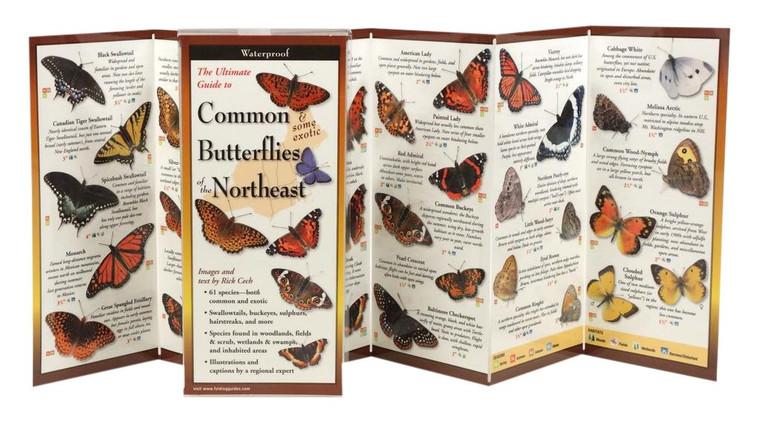 Common Butterflies Of The Northeast