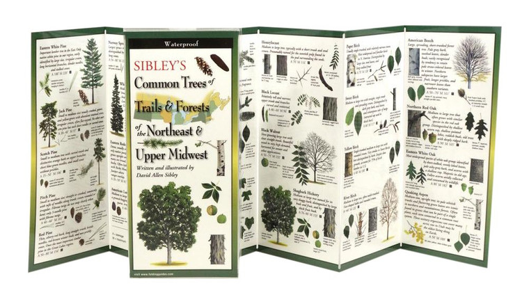 Sibley's Common Tree's Of  Trails & Forests Of The Northeast & Upper Midwest