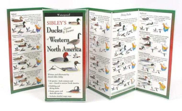 Sibley's Ducks, Geese & Swans Of Eastern North America