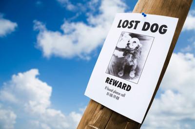 REWARD: Missing Dog
