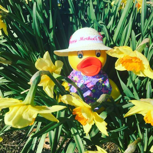 Happy Mother's Day Rubber Duck | Ducks in the Window