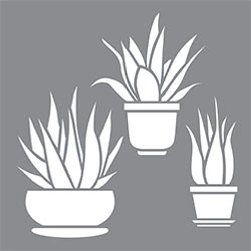 ASMM115-Y Aloe Vera