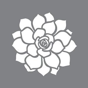 Succulent Product Image