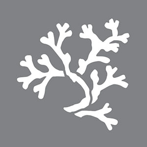 Coral Product Image