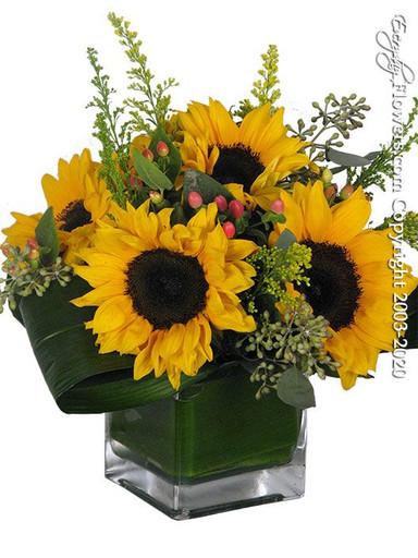 Just sunflowers created a square glass vase with six yellow sunflowers hypericum berries solidaster and seeded eucalyptus. Ti leaves are also rolled and folded placed within the arrangement. Available for same-day delivery by everyday flowers.