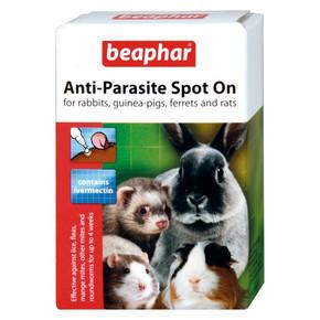 Bea Antipara Spoton Rab