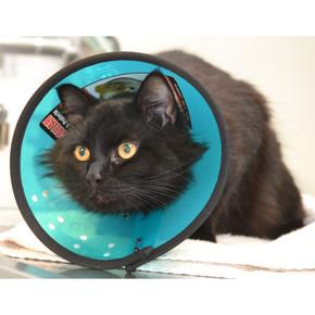 Mdc Smart Collar Cat