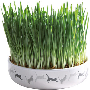 Trixie Bowl With Cat Grass