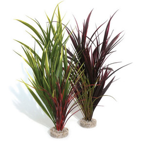 Rosewood Sydeco Giant Wild Grass
