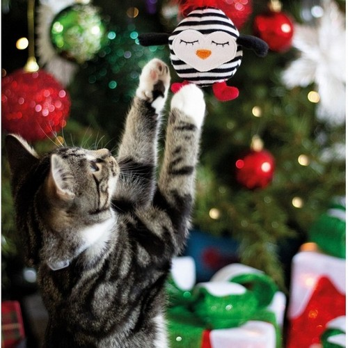 Shop Gifts for Cats