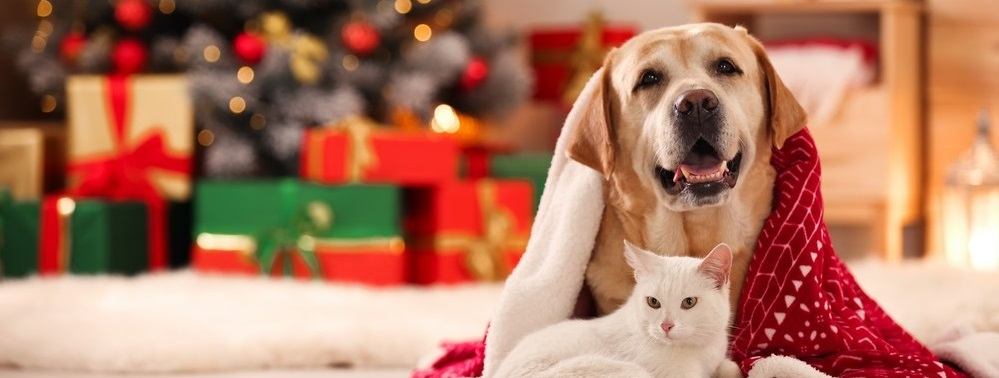 Just_for_Pets_at_Christmas