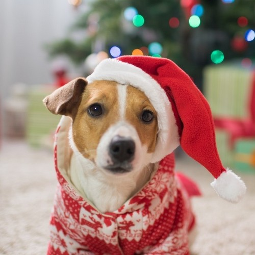 Shop Gifts for Dogs