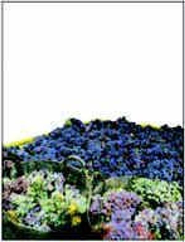Labels, Multicolor Grapes