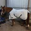 Desire Cotton Horse Rug