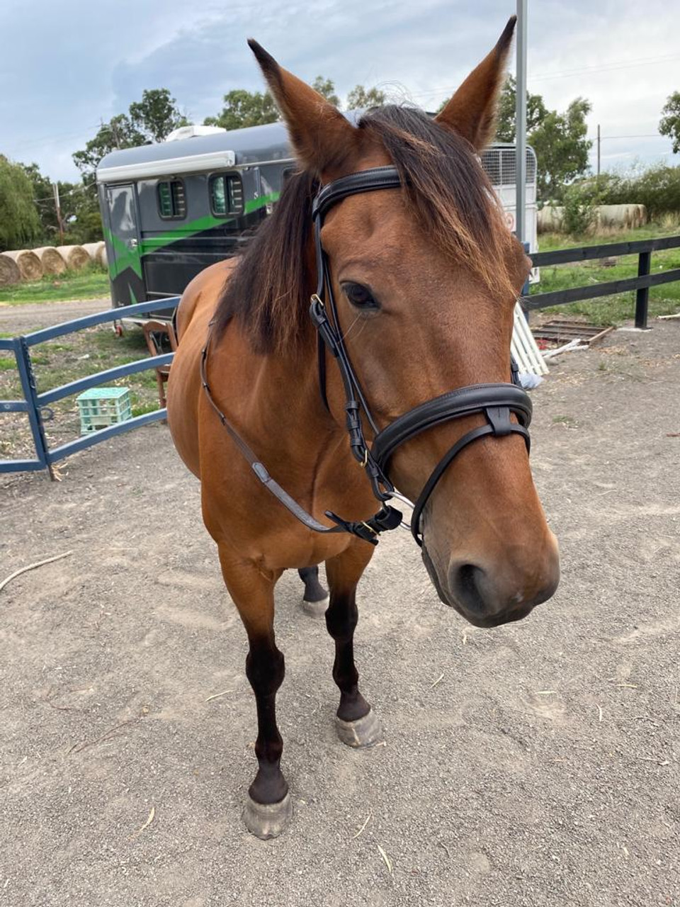 Bonzer Bridle E/L Stainless Steel Fitting Black with reins