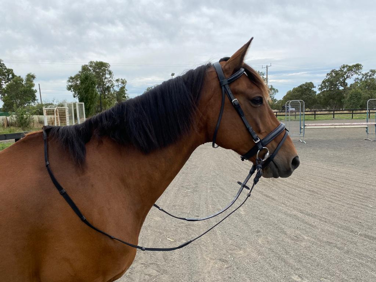 Bonzer Bridle Raised Bridle Padded crown Baracandy With Reins