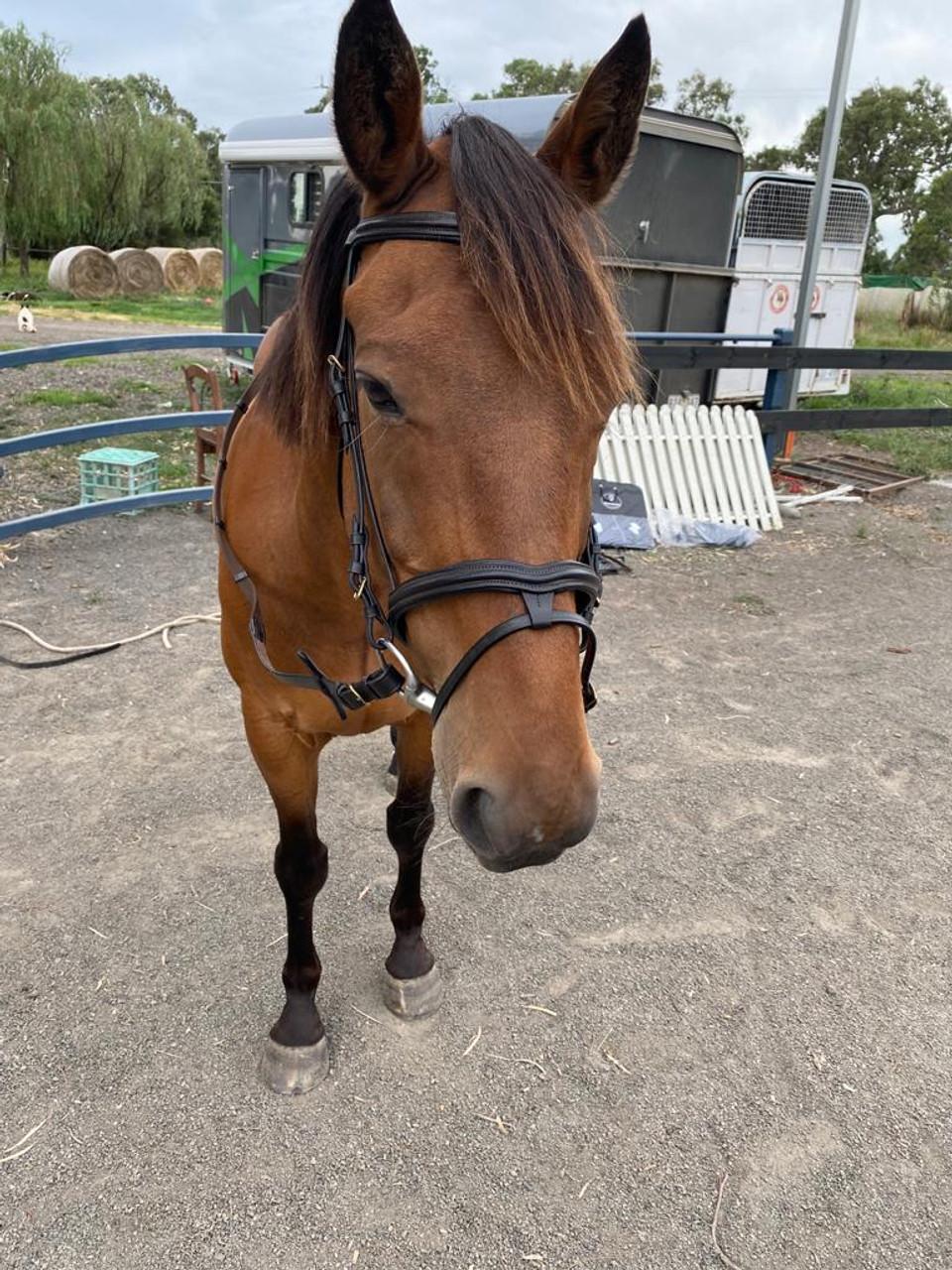 Bonzer Bridle Raised padded crown Dark Brown with reins