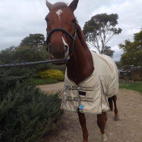 horse rainsheet